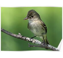 Close And Personal / Alder Flycatcher Poster