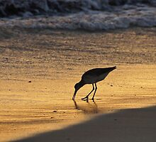 Sandpiper in Evening by Sandy Keeton