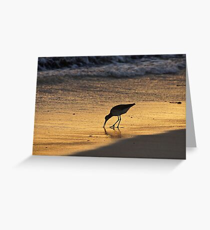 Sandpiper in Evening Greeting Card