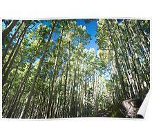 Aspen Tree Trail Poster