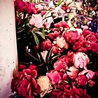 seattle flowers by bellaillume