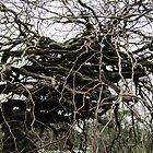 Mad Tree by Mark B Williams