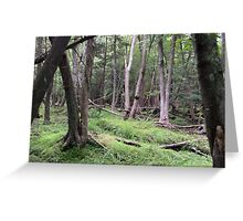Naturescape 27 Greeting Card