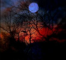 Fire In The Night by Evita
