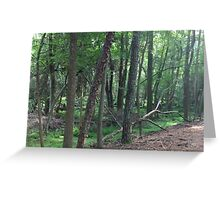 Naturescape 29 Greeting Card