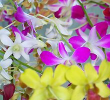 Gathering Orchids by Michelle Hamilton