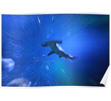 Hammerhead Shark in water Poster