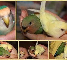 Lovebirds:  A New Generation by AuntDot