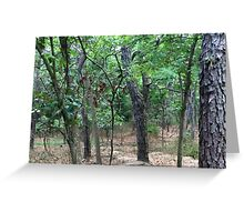 Naturescape 34 Greeting Card