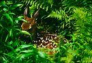 Hidden Whitetail Fawn by Joe Elliott