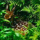 Hidden Whitetail Fawn by Joe Elliott