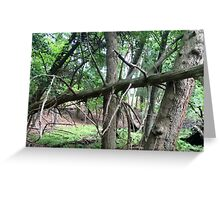 Naturescape 38 Greeting Card