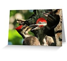 Female Pileated Woodpecker at nest Greeting Card