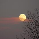 Moon ,clouds and silhouettes by MaeBelle