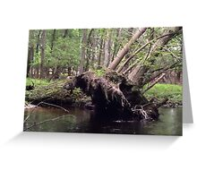 Naturescape 40 Greeting Card