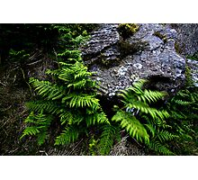 Rock and Ferns Photographic Print