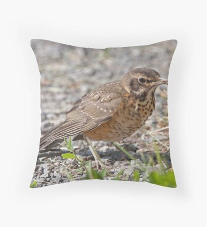 The Unsure Juvie American Robin Throw Pillow
