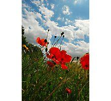 wild poppies. Photographic Print