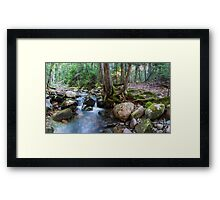 Hunters Brook Trail – Acadia National Park, Maine Framed Print