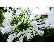 Pure White Beauty Photographic Print