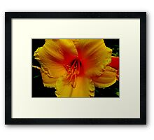 Yellow Cheer Right Here Framed Print