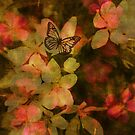 Gental Kiss Of A Butterfly by Terrie Taylor