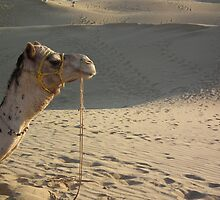 Camel's face by Patricia Bier