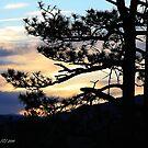 Sunset  by Katagram