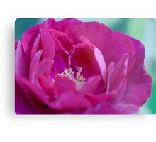 Oh, Rose So Pink Metal Print