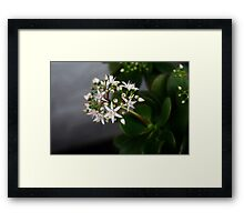 Flowering Jade Framed Print