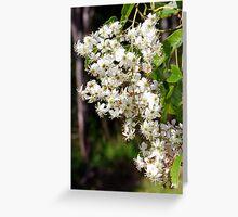 Flowers of Rubus cissoides Bush Lawyer Greeting Card