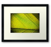 Green Yellow Framed Print