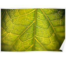Green Veins Poster