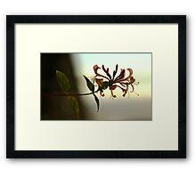 Honeysuckle. Framed Print