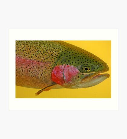 Western Oregon Rainbow Trout Art Print