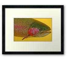 Western Oregon Rainbow Trout Framed Print