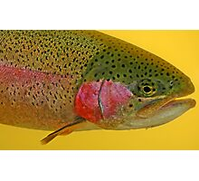 Western Oregon Rainbow Trout Photographic Print