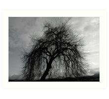 Weeping Willow Art Print