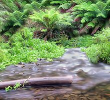 Barham River Panorama by Shannon Rogers