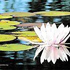 Floral Reflections by Caroline  Lembke