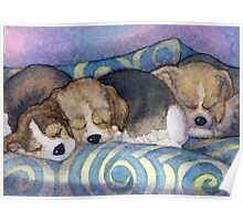 To sleep, perchance to dream - Beagle puppies on the sofa Poster