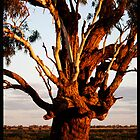 Gnarled Tree!  by Anna Ryan