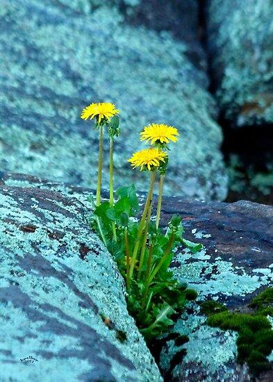 Love On The Rocks by Brian Pelkey