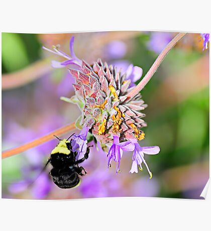 Sweet Garden Bumble Bee  •  Maxwell House Poster