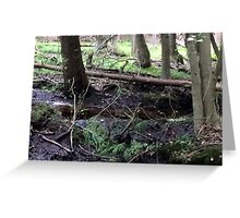 Naturescape 48 Greeting Card