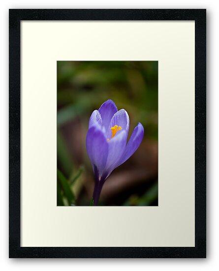 Purple Beauty by Trevor Kersley