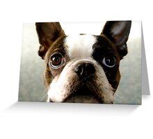 Hugo - 2 yo Boston Terrier Greeting Card