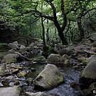 Padley Gorge, Derbyshire by Mike Topley