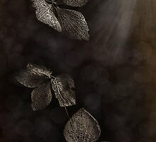 Sunlight and Lace by Dianne English
