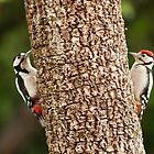 Woodpecker Mirror? by TerryPatrick
